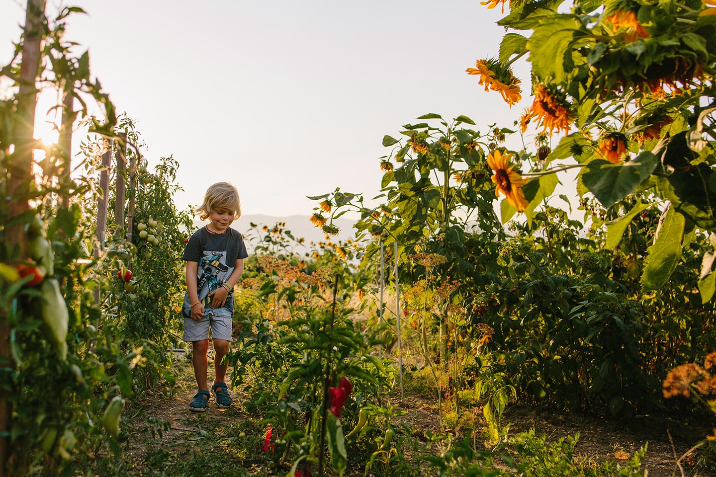 Family photography, boy in the garden, flowers,Alice Payne photography
